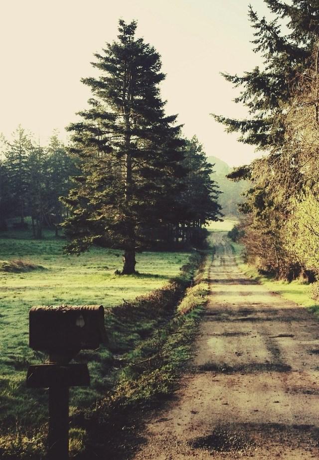 the long road.jpg