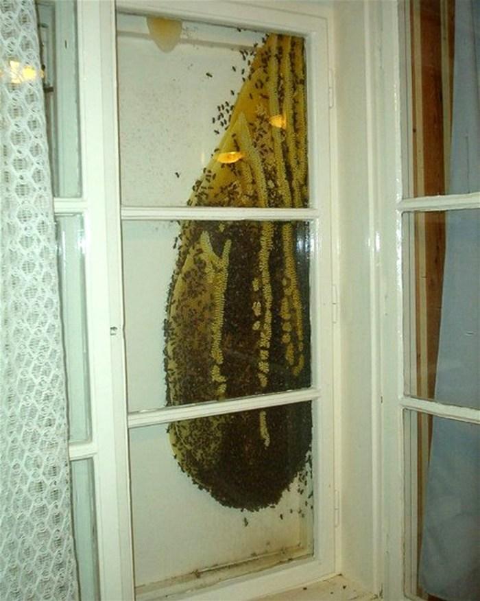 Honey Window.jpg