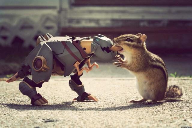 robo squirrel feeder.jpg