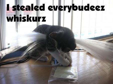 I stealed everybudeez whiskurz.jpg