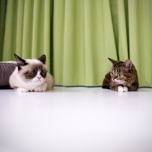 Tard and friend.jpg