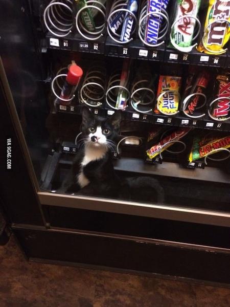 kitten snack machine.jpg