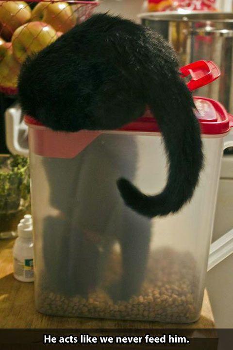 cats never get fed.jpg