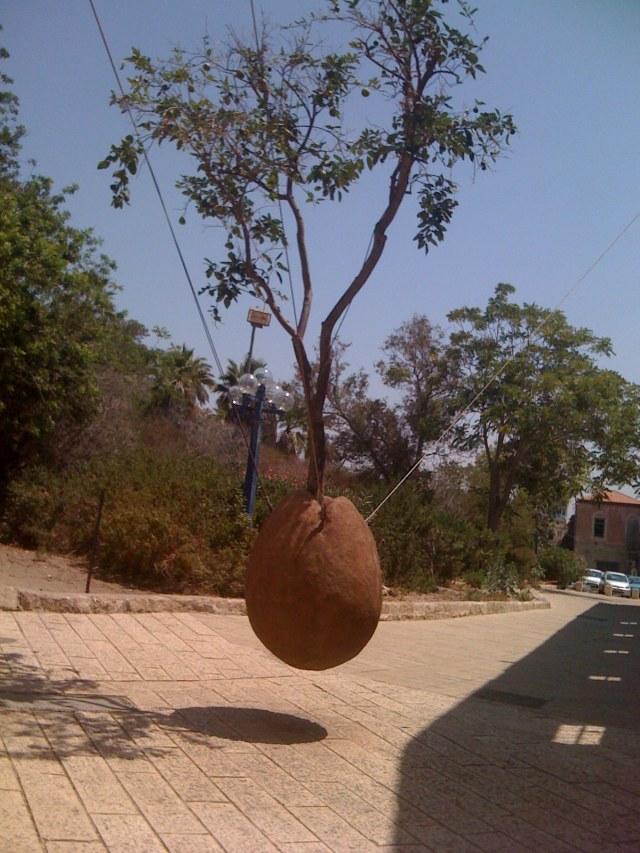 floating tree.jpg