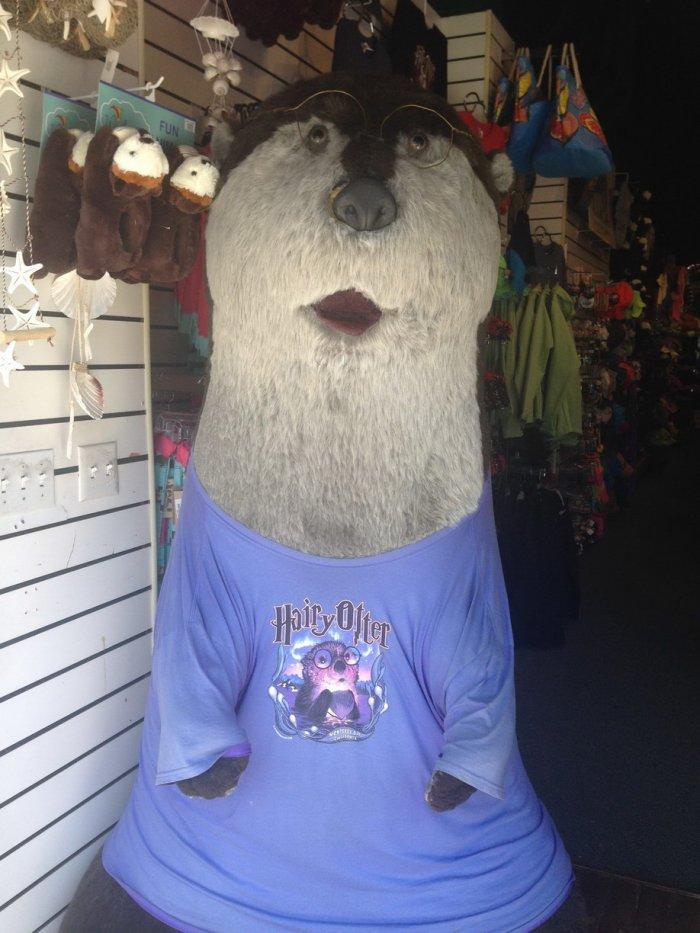 Hairy otter.jpg