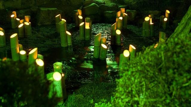 Bamboo Lights.jpg