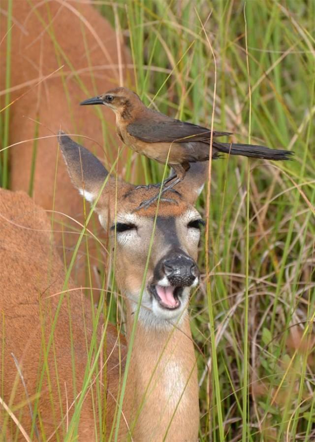 Bird Perch.jpg