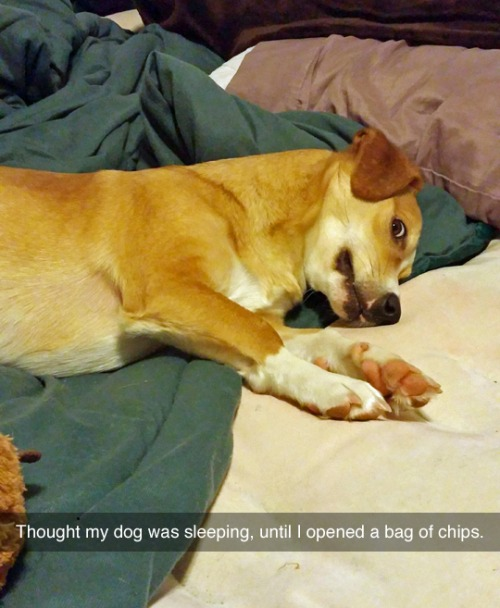 Dogs and chip bags.jpg