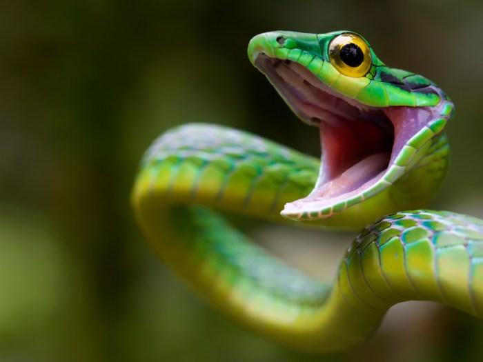 Happy Snake.jpg
