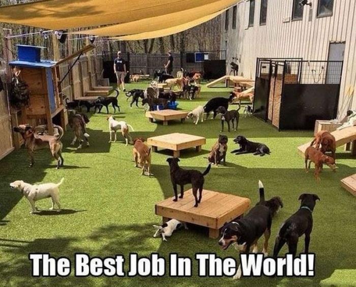 best job in the world.jpg