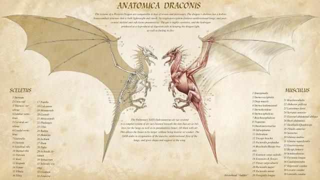 Anatomica Draconis.jpg