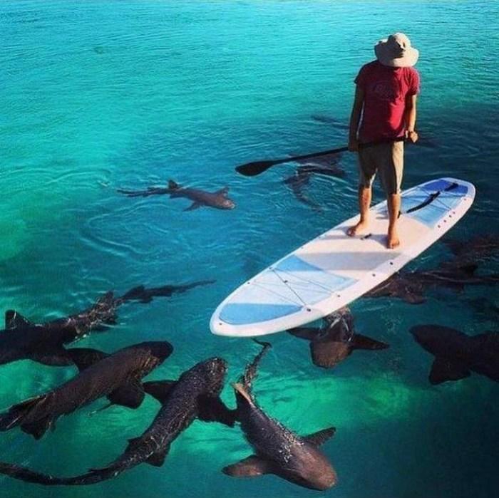 Shark paddle board.jpg