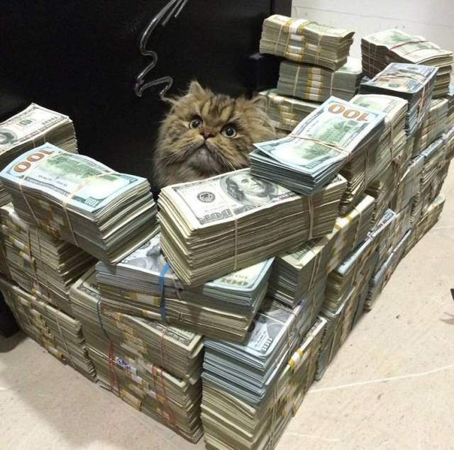 Money Fort for a cat.jpg