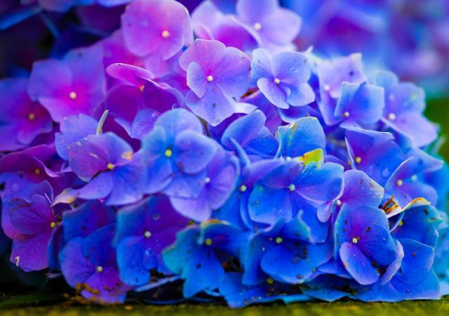 Flowers of color.jpg