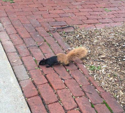 half a squirrel.jpg