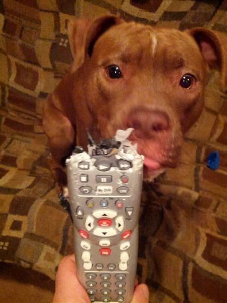 remote control dog.jpg