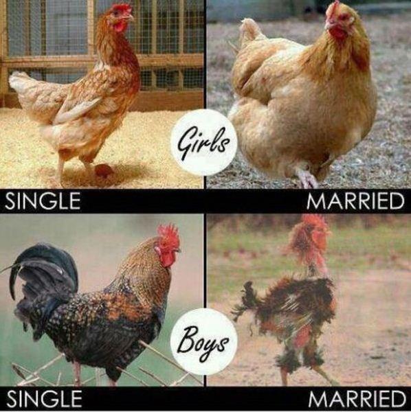single and married.jpg