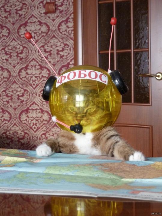 space cat.jpg