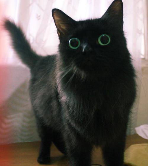 LSD Cat.jpg