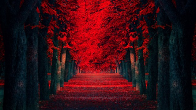 Red Forests.jpg