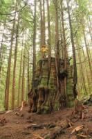 awesome living tree stump.jpg