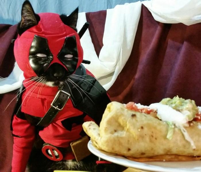Catpool-Deadpool-Cosplay-001