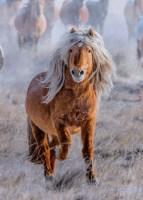 Donald Trump as a Horse.jpg