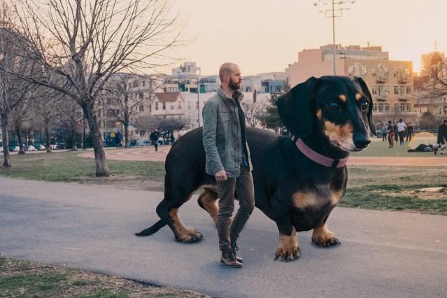 Big Dog.jpg