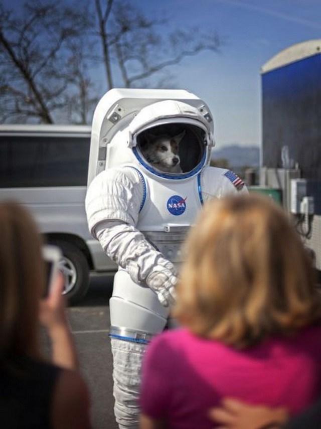 NASA Dog.jpg
