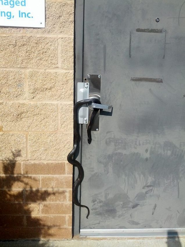 Snake Security System.jpg