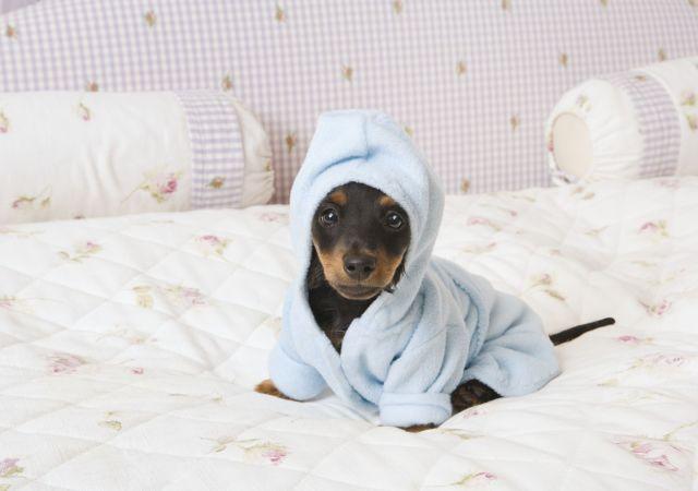 cute dog in a hoodie.jpg
