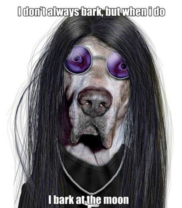 ozzy-dog-captions-017-08062013