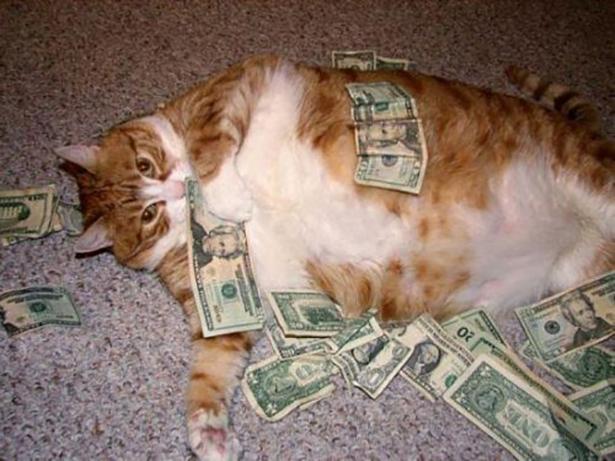 cat-shut-take-my-money-018-11262013