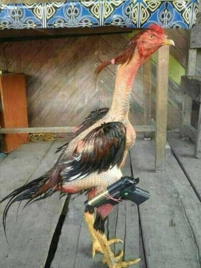 chicken with a gun.jpg