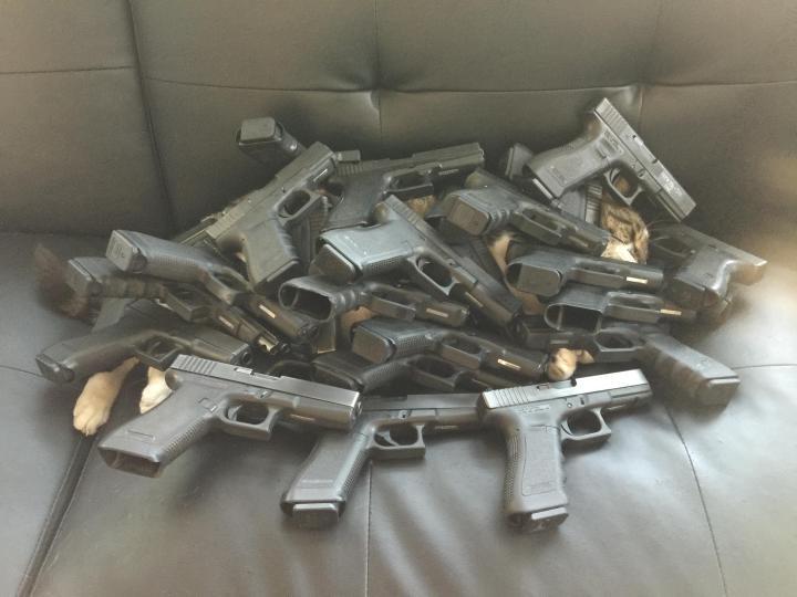 gun covered kitty.jpg