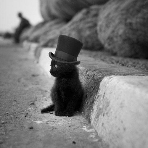 top hat cat.jpeg