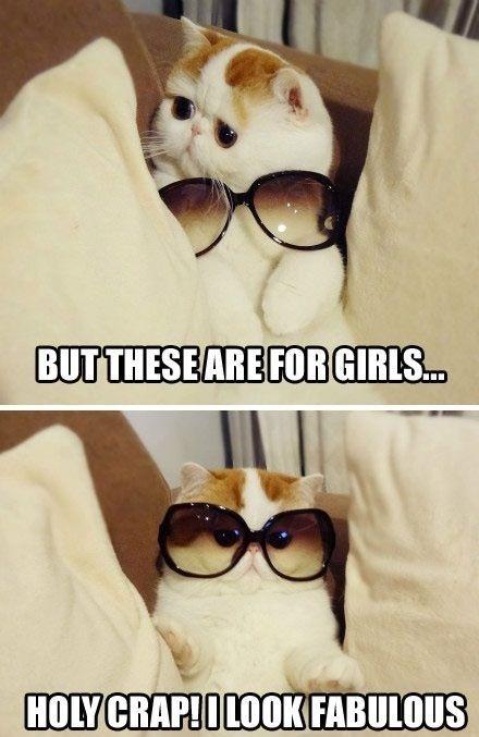 fabulous_cat.jpg (83 KB)