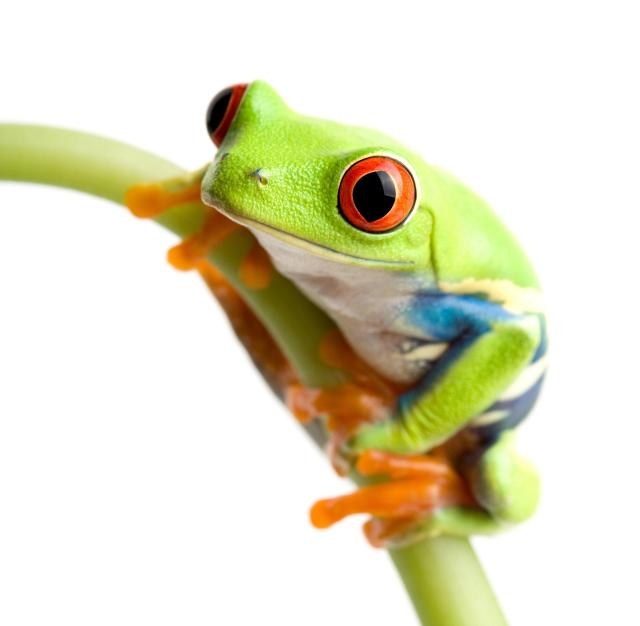 frog2.jpg (461 KB)