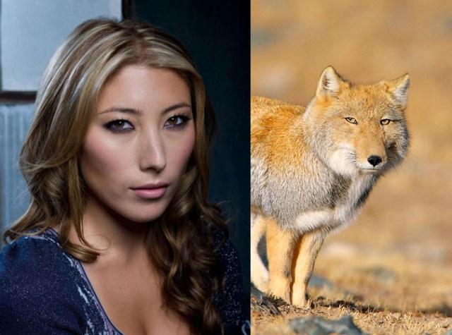 coyote_face.jpg (79 KB)