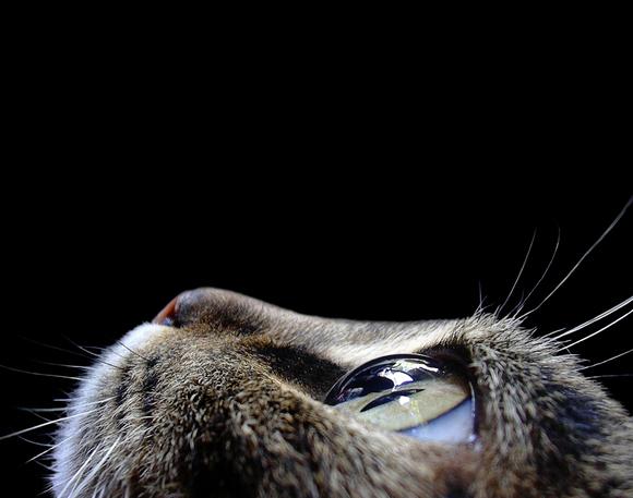 cateye.jpg (175 KB)