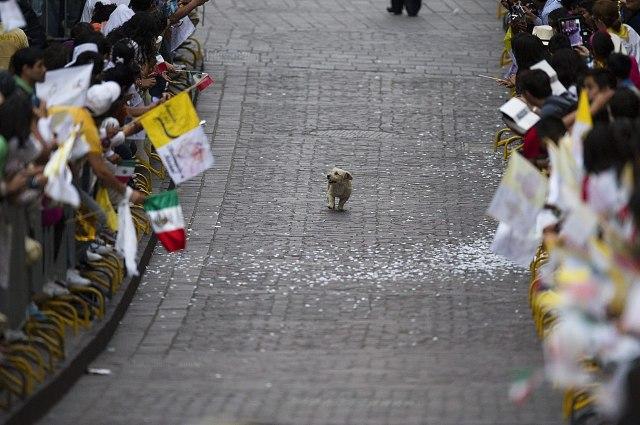 parade_dog.jpg (238 KB)