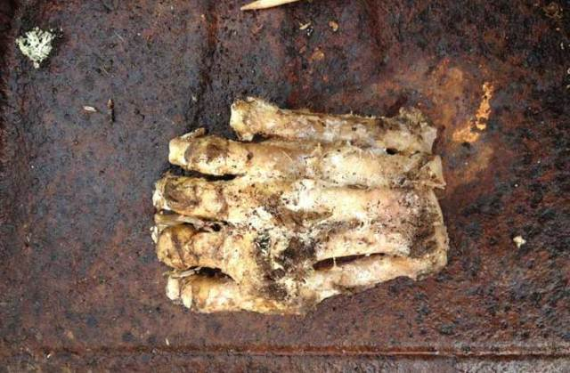 Bigfoots-big-foot.jpg (59 KB)