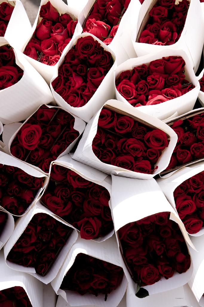 Roses.jpg (696 KB)