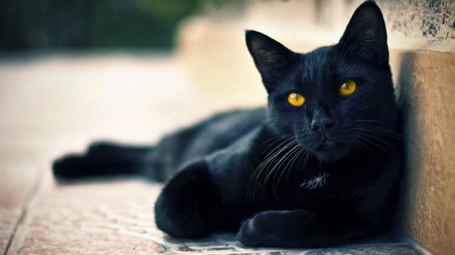 black-cat.jpg (325 KB)