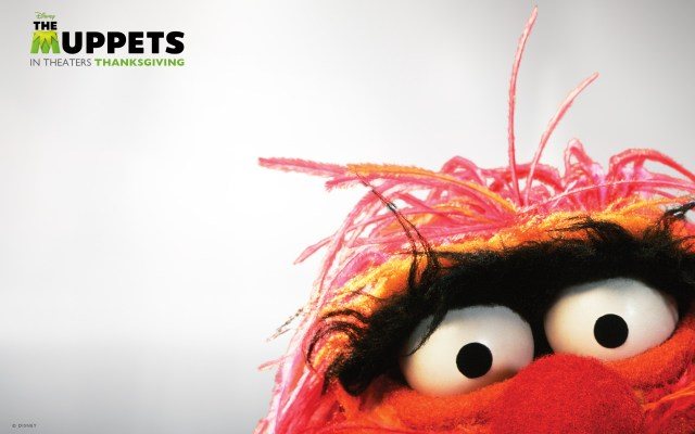 the-muppets-wallpaperanimal.jpg (434 KB)