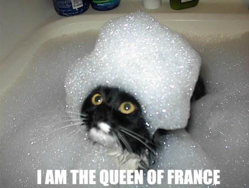 queen.jpg (79 KB)
