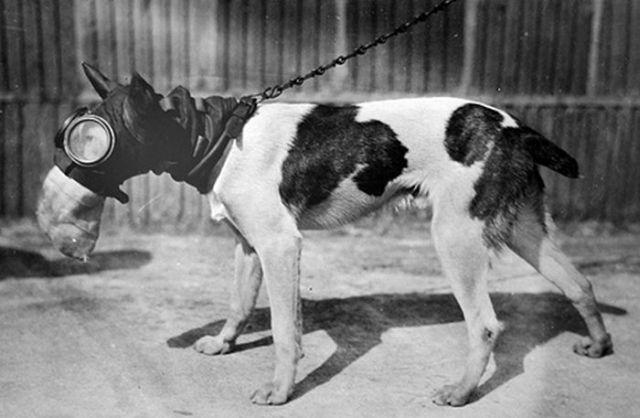 dog_gas_masks_10.jpg (42 KB)