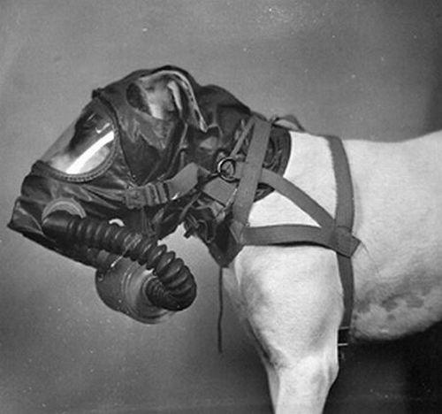 dog_gas_masks_13.jpg (31 KB)