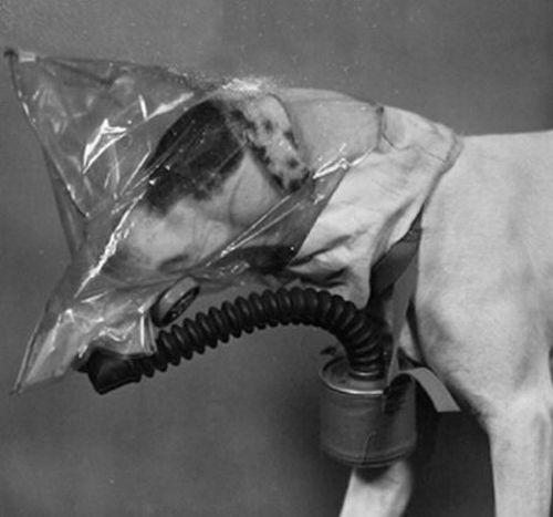 dog_gas_masks_14.jpg (27 KB)