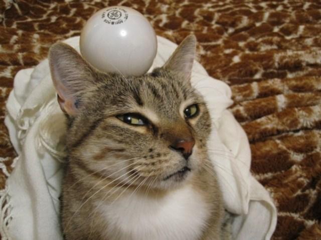 lightbulb.JPG (132 KB)